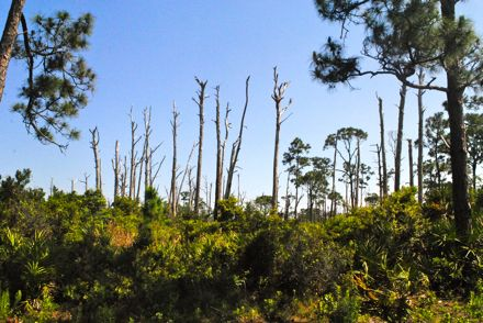 johnathan dickinson state park