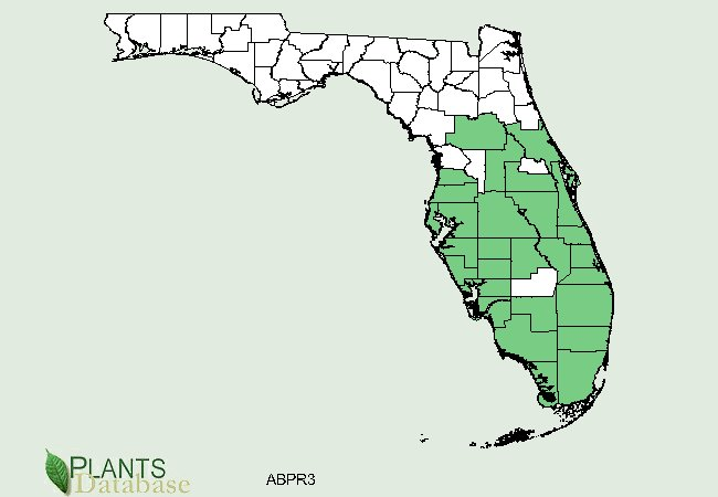 rosary pea distribution in florida
