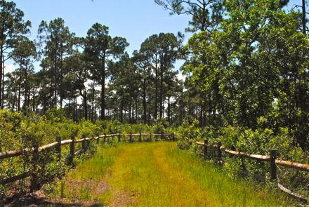 acreage pines