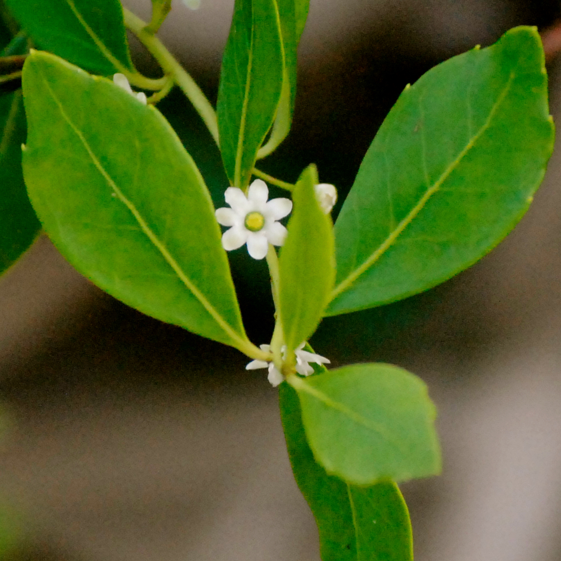 Wild South Florida Flowering Plants And Trees